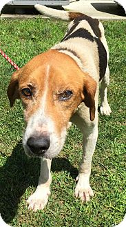 Hound (Unknown Type) Dog for adoption in Morehead, Kentucky - Kenneth