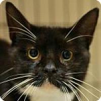 Adopt A Pet :: Valenteen - Medford, MA