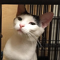 Adopt A Pet :: Cassandra - Atlanta, GA