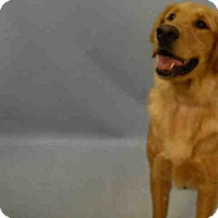 Adopt A Pet :: DAX - Brooklyn, NY