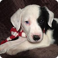 Adopt A Pet :: Quinn - Kittery, ME