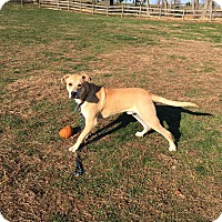 Adopt A Pet :: Zeus - Unionville, PA