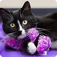Adopt A Pet :: Marlene - Chicago, IL