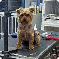 Adopt A Pet :: Maddox - Conroe, TX