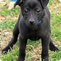 Adopt A Pet :: Bode - Staunton, VA