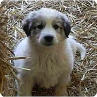 Adopt A Pet :: Margarita - Staunton, VA