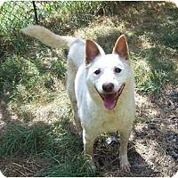 Adopt A Pet :: Pretty PERFECT COMPANION - Antioch, IL
