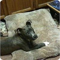 Adopt A Pet :: Lucky,all love and kisses - Sacramento, CA