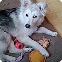 Adopt A Pet :: Luna - Saskatoon, SK