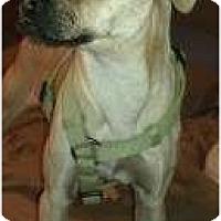 Adopt A Pet :: Wyatt Earp - Phoenix, AZ