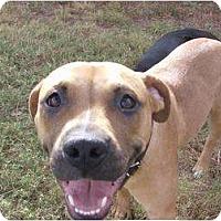 Adopt A Pet :: Lily - Only $85 adoption fee! - Litchfield Park, AZ