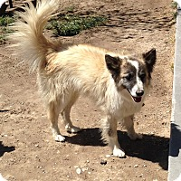 Adopt A Pet :: George - Yerington, NV