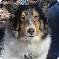 Adopt A Pet :: Patches - Pueblo West, CO