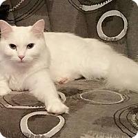 Adopt A Pet :: Jacoby - Berkeley Hts, NJ