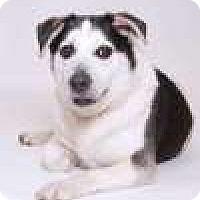 Adopt A Pet :: Big Mac - Sudbury, MA
