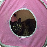 Domestic Shorthair Cat for adoption in Fremont, Nebraska - Ethel