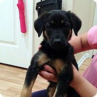 Adopt A Pet :: Drake - Irvine, CA