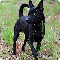 Adopt A Pet :: Hobo - Rockingham, NH