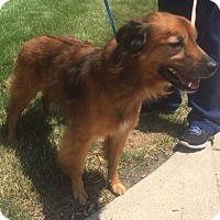Adopt A Pet :: CURRY - Rossford, OH