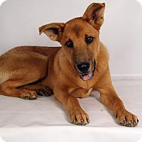 Adopt A Pet :: Jake Shepmix - St. Louis, MO