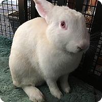 Adopt A Pet :: Flicka - Miami, FL