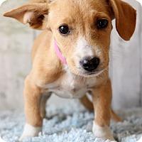 Adopt A Pet :: Jaynie - Waldorf, MD
