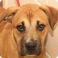 Boxer Mix Dog for adoption in McDonough, Georgia - Thomas