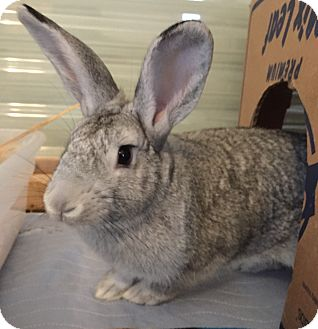 Other/Unknown Mix for adoption in Watauga, Texas - Hawkins