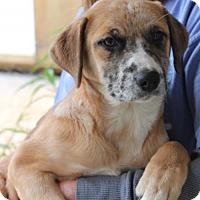 Adopt A Pet :: Misty 25958 - Prattville, AL