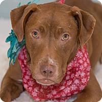 Adopt A Pet :: Kamara - Flint, MI