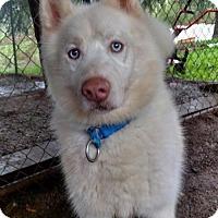 Adopt A Pet :: Max - Campbell, CA