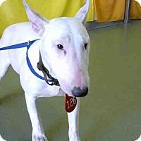 Adopt A Pet :: URGENT on 1/19 @DEVORE - San Bernardino, CA