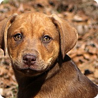 Adopt A Pet :: Rocket - Glastonbury, CT