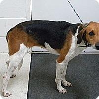 Adopt A Pet :: Jessie - Lancaster, VA