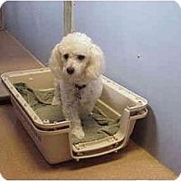 Adopt A Pet :: Kasey - La Costa, CA