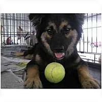 Adopt A Pet :: Fritzy Friz - Kingwood, TX