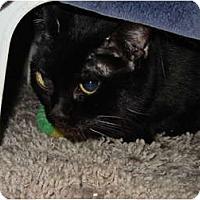 Adopt A Pet :: Maui - Syracuse, NY