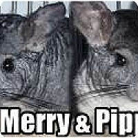 Adopt A Pet :: Merry - Virginia Beach, VA