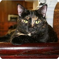Adopt A Pet :: Bridgette - Bonita Springs, FL