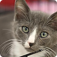 Adopt A Pet :: Flick - Sacramento, CA