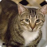 Adopt A Pet :: Marion - Alden, IA