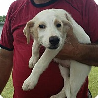 Adopt A Pet :: Zane-pending adoption - East Hartford, CT