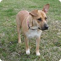 Adopt A Pet :: Maya, My Love - Akron, OH