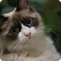 Adopt A Pet :: Eva - The Colony, TX