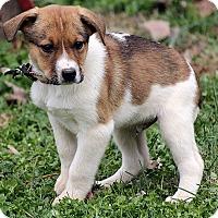 Adopt A Pet :: Dylan - Windham, NH
