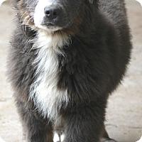 Adopt A Pet :: Wyoming - Woonsocket, RI