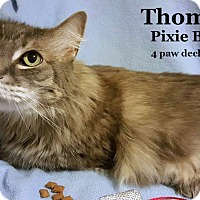 Adopt A Pet :: Thomas 2016 - Bentonville, AR