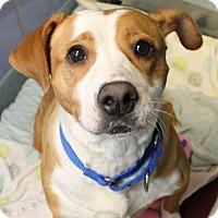 Adopt A Pet :: Poppy - Richmond, VA