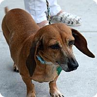 Adopt A Pet :: Roxie - Memphis, TN