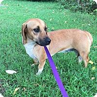 Adopt A Pet :: Bessie - Harrisonburg, VA